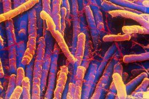 Co to w ogóle za bakteria