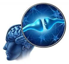 Neurocyclin- dla lepszej pamięci – czy warto – działanie – allegro